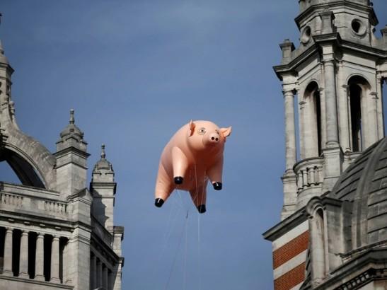 pig_near